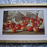 c1900 Apples Print Half Yard Long Antique Fruit