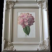 Antique Hydrangea Print Edward Hulme Chromolithograph Victorian