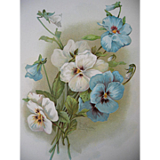 c1890s Catherine Klein Pansy Print Pansies Chromolithograph
