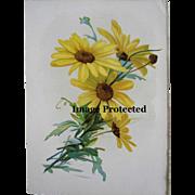 c1890s Catherine Klein Daisy Print Flower Chromolithograph