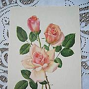 Vintage Roses Print