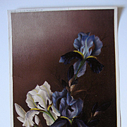 Antique Iris Print Henri Le Roy