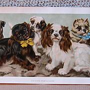 Van Vredenburgh Puppies Yard Long Print