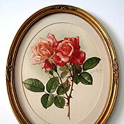 c1901 Roses Print Paul de Longpre