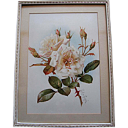 Antique White Bridal Roses Print Paul de Longpre Original Frame Old Glass