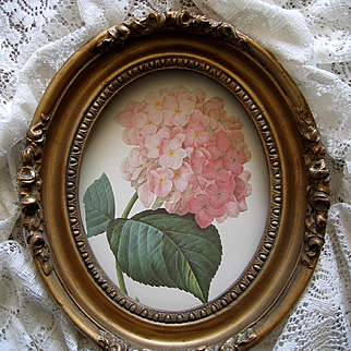 Vintage Hydrangea Print Redoute Barbola Frame