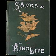 Antique Bird Book Songs of Bird Life  Giacomelli 18 Engraving Print s