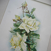 c1890s Catherine Klein White Cabbage Roses Print Chromolithograph Rosebuds Flower Floral Rose