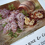 Antique 1906 Baby Chick Lilac Calendar Print Embossed edge
