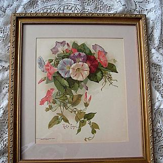 c1897 Morning Glories Print Paul de Longpre Chromolithograph Antique Victorian Flower Floral Book Author Autographed