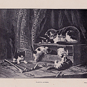 Antique Henriette Ronner Cat Kitten French Print Playful Kittens c1900