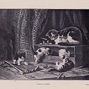 Antique Henriette Ronner Cat Kitten French Print Playful Kittens c1900
