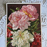 c1895 Antique Victorian Peonies Print Roseland Peony  Flower Chromolithograph Half Yard Long