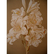 Antique Lily Print Maguire Chromolithograph Half Yard Long