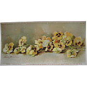 c1892 Antique Pansies Print Maud Stumm Pansy Chromolithograph Half Yard Long