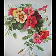 Nasturtiums Flower Print Paul de Longpre Vintage