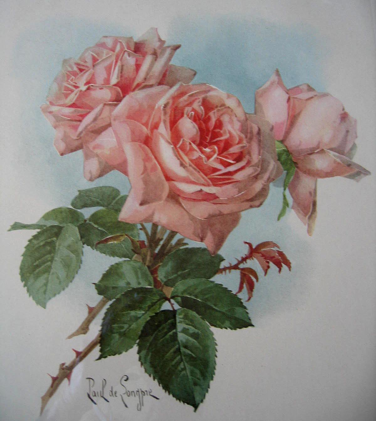 Paul de Longpre Pink Roses Print Fine Condition Lithograph