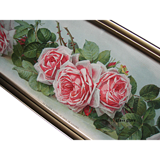 La France Roses Yard Long Print Paul de Longpre Antique c1903 The Art Interchange Book Author Autograph