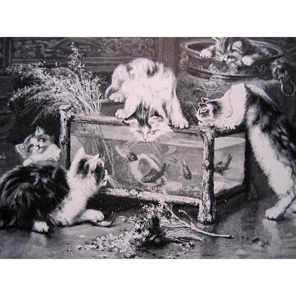 c1880 Cat Kitten Engraving Print Very Fine Huber Goldfish Fish Aquarium