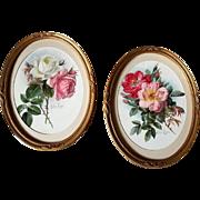 Pair Paul de Longpre Roses Prints Antique Victorian Chromolithograph Print s