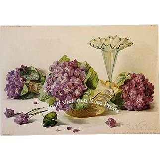 c1898 Violets Print Frieda Voelker Redmond Chromolithograph Antique Victorian Half Yard Long