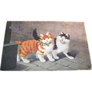 Charming Kitty Cat Postcard  Carte Postale Poskarte