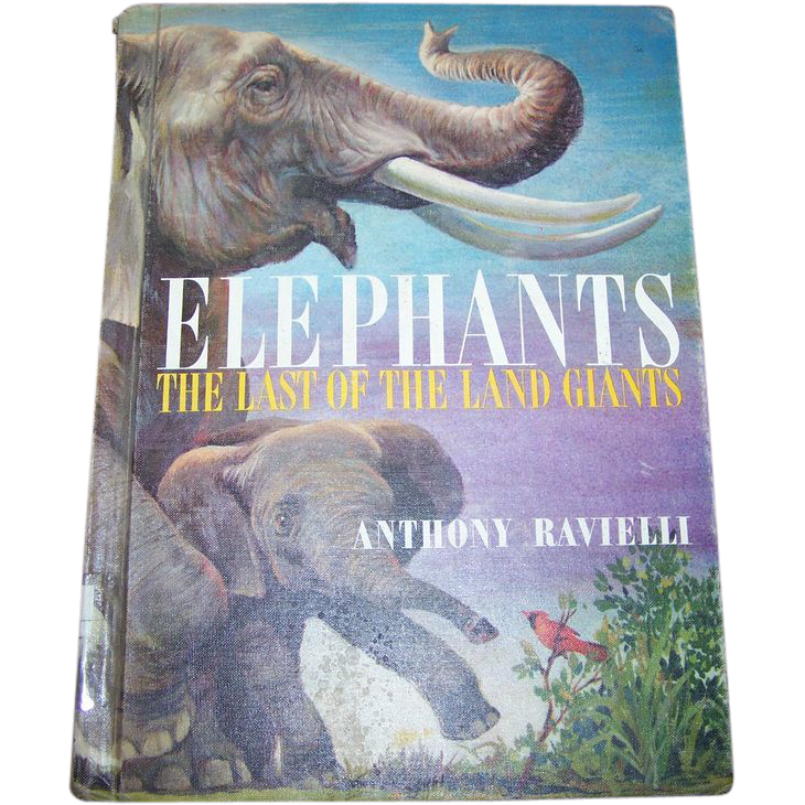 Elephants The Last Of The Land Giants By Anthony Ravelli