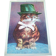 Vintage Historical Kitty Cat Post Card Mr. KAATSKILL - 167 CM