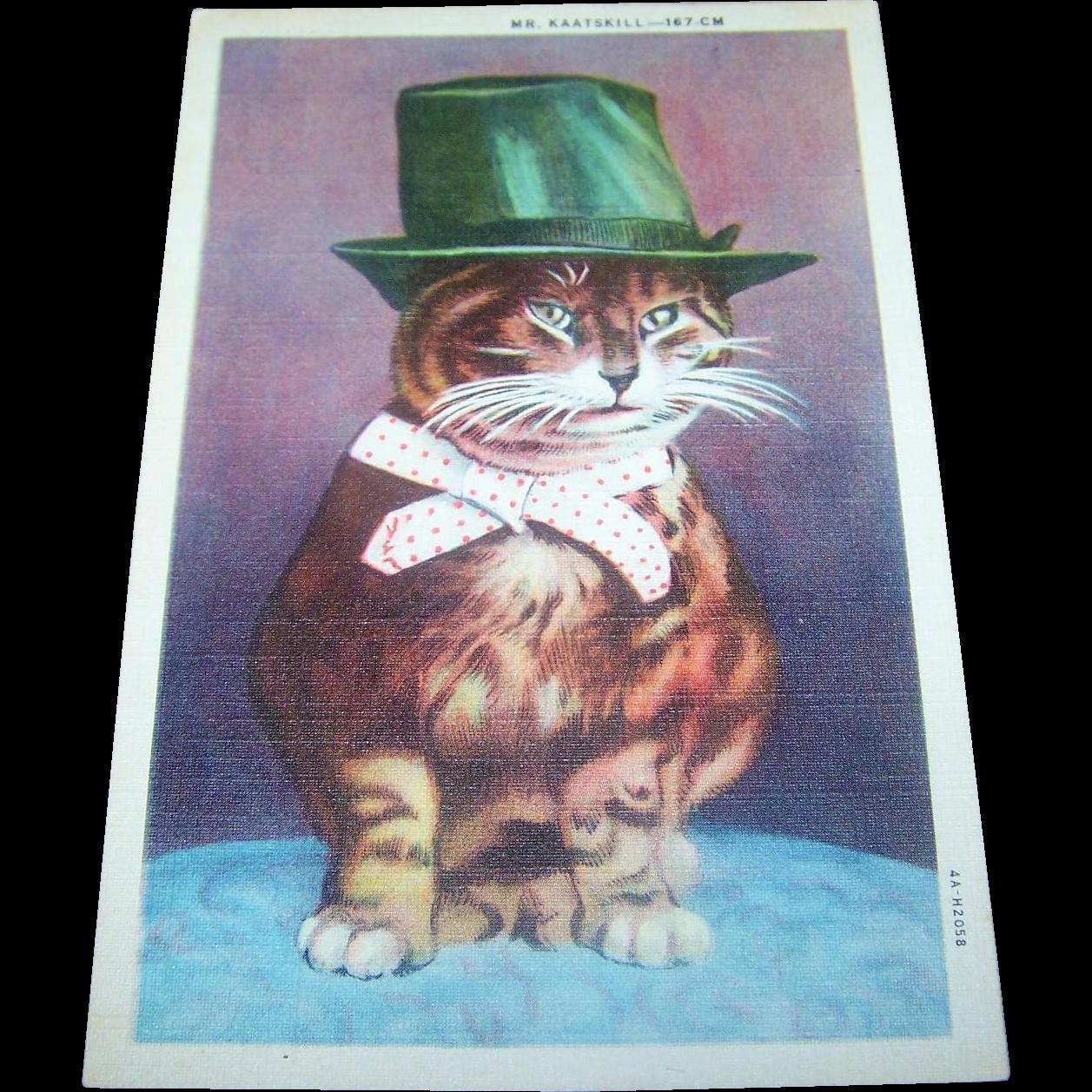 Vintage Historical Kitty Cat Post Card Mr. KAATSKILL - 167 CM