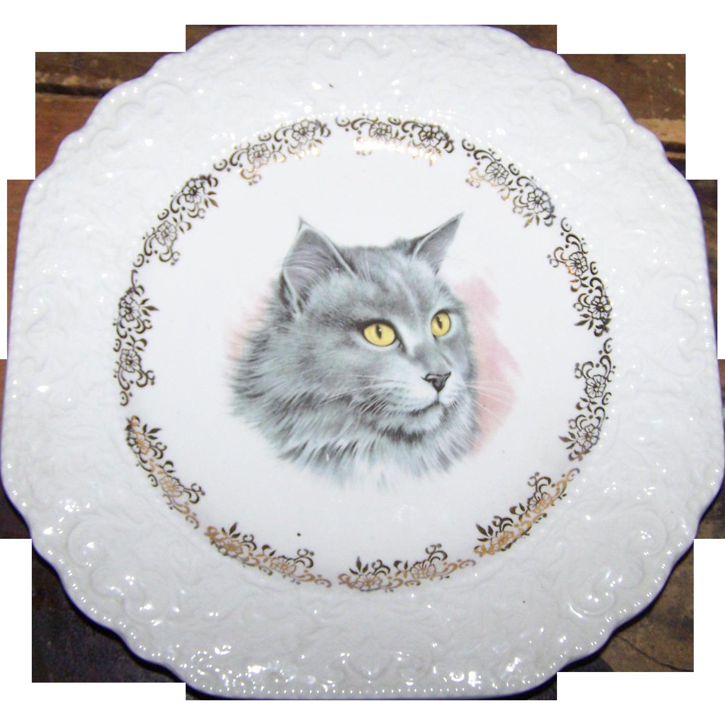 Sweet Decorative EMbossed Feline Kitty Cat Portrait Plate Lord Nelson Pottery MI England