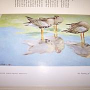 H.C. Book Wild Chorus 1939 Charles Scribner's Sons