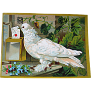 Beautiful Ad Card White Carrier Pigeon - Burdock Blood Bitters - Large Size