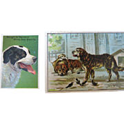 Two Trade Cards Dogs - St. Bernards