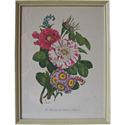 Vintage 1940s Framed Floral Botanical Cottage Print Benoit Chirat