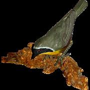 Carved Yellowthroat Songbird