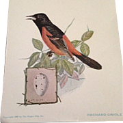 The American Singer Series No.5 Orchard Oriole