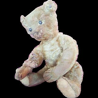 "Antique 1910  Steiff 12 1/2"" Teddy Bear with FF Button"