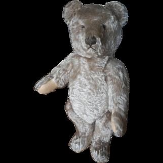 """1950's Steiff 20"""" Long Curly Mohair Teddy Bear"""