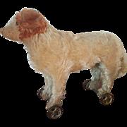 Antique 1910 Steiff Teddy Bear Co. St. Bernard Mohair Dog Pull Toy on Wheels