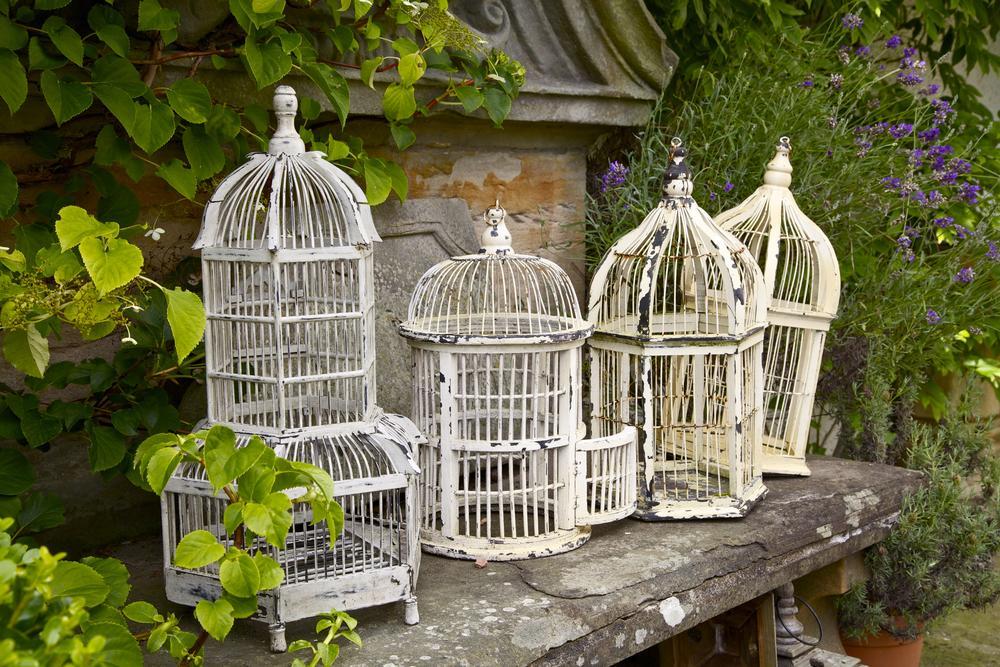 Birds & Bird Cage's